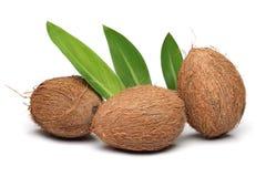 кокос 3 Стоковая Фотография RF