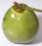 кокос Стоковое Изображение