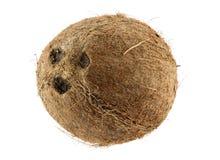 кокос Стоковое Изображение RF
