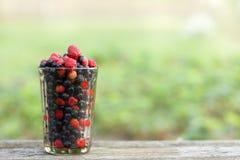 Коктеиль с свеже выбранными ягодами Стоковое Изображение