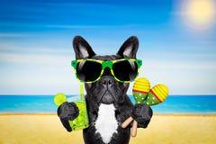 Коктеиль пляжа лета собаки Стоковые Изображения RF
