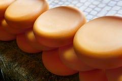 Колеса сыра в ряд outdoors Стоковые Изображения RF