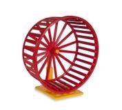 колесо грызунов Стоковая Фотография RF
