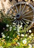 колесо деревянное Стоковое Изображение RF