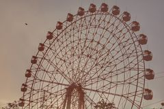 Колесо и птица Ferris стоковые фото