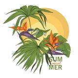 Колибри и тропические заводы и цветки иллюстрация вектора