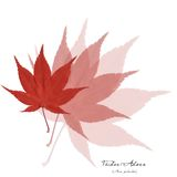коллаж Асера выходит красный цвет Стоковые Изображения RF