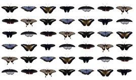 коллаж бабочек Стоковые Фотографии RF
