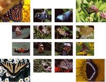 коллаж бабочки Стоковое фото RF
