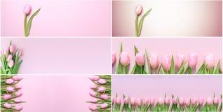 Коллаж горизонтальных фото тюльпанов пинка знамени на задней части пинка Стоковое фото RF