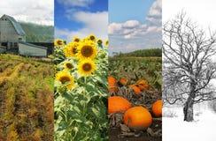 Коллаж 4 изображений dispecting сезоны Стоковое Фото