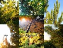 Коллаж лета с соснами через заход солнца с природой письменных слов красив стоковые фотографии rf