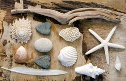 коллаж морской Стоковая Фотография