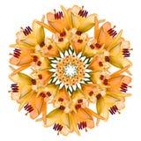 Коллаж оранжевых красивых цветков лилии на белой предпосылке стоковая фотография rf