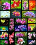 Коллаж орхидей Стоковое Фото