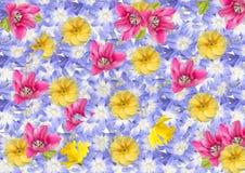 Коллаж, предпосылка, открытка изолированных цветков весны Стоковое Изображение