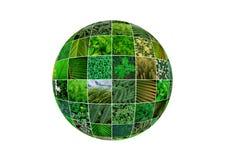 Коллаж природы зеленый Концепция зеленой планеты творческая коричневейте покрытую землю дня относящое к окружающей среде листво и Стоковые Фото