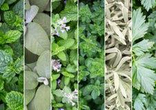 Коллаж различных видов трав стоковое изображение rf