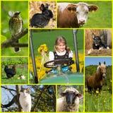 Коллаж различных изображений жизни страны стоковые изображения