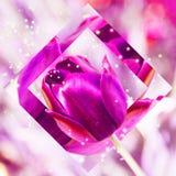 Коллаж розовых тюльпанов Стоковое Фото