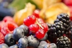 Коллаж ягод стоковое изображение rf