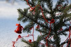 Колокол рождества на ветви хвойного дерева, парк Стоковое Фото