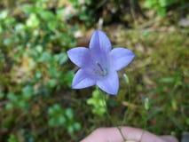 Колокол цветка леса, конец - вверх Стоковые Фотографии RF