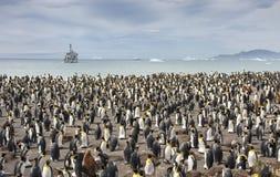 Колония короля penguing в Южной Георгие стоковое фото rf