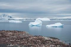 Колония на пляже, Антарктика пингвинов Адели Стоковое Изображение