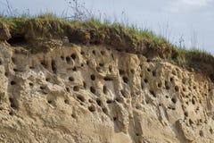 Колония отверстий птицы в скале snadstone на пляже около Балтийского моря Стоковые Изображения