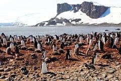 Колония пингвина Chinstrap в Антарктиде Стоковая Фотография RF