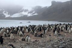 Колония пингвина Chinstrap с туманной горой в предпосылке Стоковое Изображение