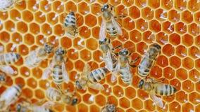 Колония пчел работает внутри крапивницы стоковое фото rf
