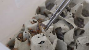 Колония таракана в зоопарке сток-видео