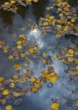 Колорадо Fall-12 4279 Стоковые Изображения RF
