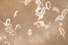 Колоски леса в апреле сухой травы ` s last year весной на заходе солнца backlit солнечний свет Стоковые Фотографии RF