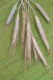Колоски пшеницы на зеленой предпосылке Взгляд сверху стоковые изображения rf