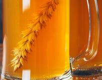 Колосок ячменя в кружке пива светлого пива Стоковые Изображения RF