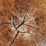 Кольца вала деревянные Стоковые Изображения