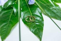 2 кольца, влюбленность и свадьбы Стоковое Фото