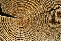 кольца времени Стоковая Фотография