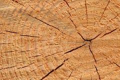 Кольца дерева маркируют проход времени стоковое изображение
