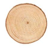 кольца дерева Стоковое Изображение
