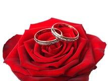 кольца золота подняли Стоковая Фотография RF