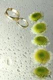 кольца падений хризантем wedding Стоковая Фотография