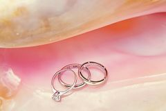 Кольца с любовью надписи Кольца в раковине стоковое изображение rf