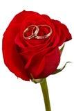 кольца цветка подняли 2 wedding Стоковое фото RF