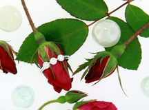 кольцо диаманта Стоковое Изображение RF