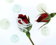 кольцо диаманта стоковое фото rf