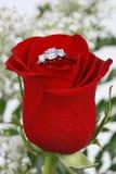 кольцо лепестков красное подняло Стоковое Фото